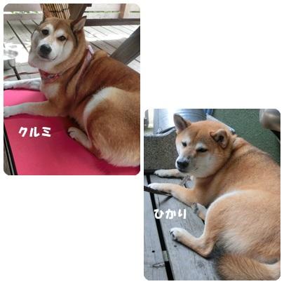 2014-7-73.jpg