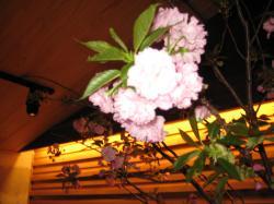 桜まつり2014-3