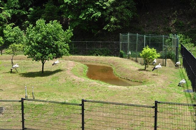 02 コウノトリの郷公園 公開ゲージ