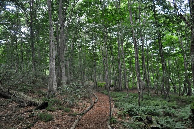 019 岳岱自然観察教育林の様子
