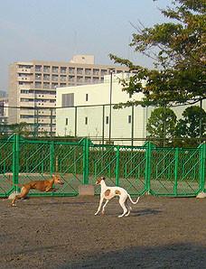 20081011_1.jpg