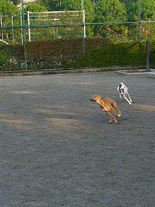 20081011_2.jpg
