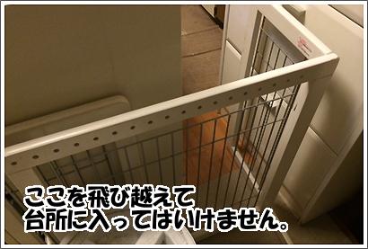 20140313_15.jpg