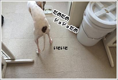 20140401_16_1.jpg