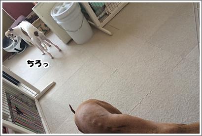20140401_6_1.jpg