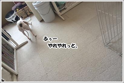 20140401_8_1.jpg