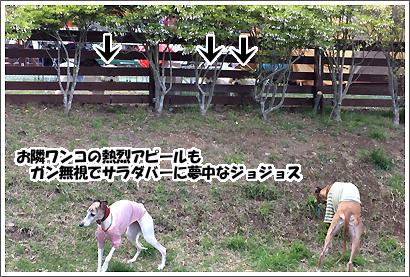 20140520_11.jpg