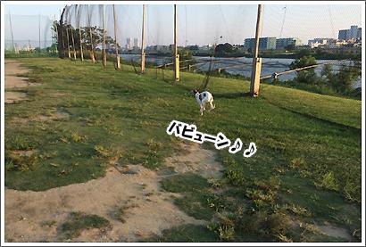 20140601_41.jpg