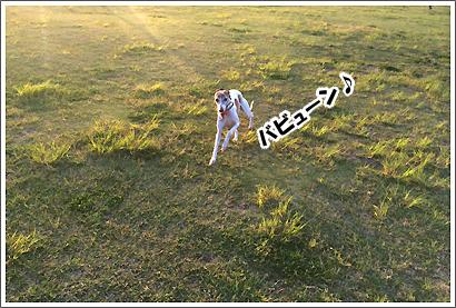 20140601_46.jpg