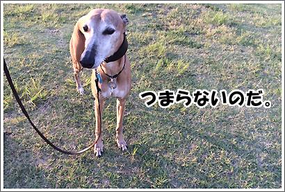 20140601_49.jpg