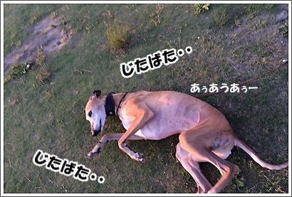 20140601_50.jpg