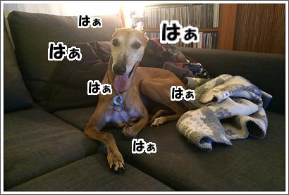 20140618_14.jpg