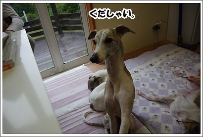 20140701_17.jpg