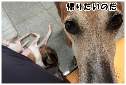 20140707_28.jpg