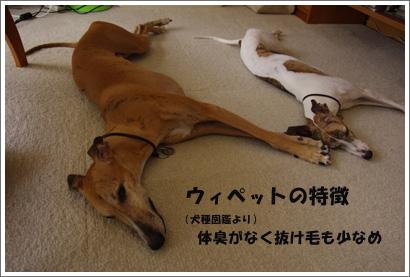 20140715_5.jpg