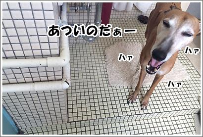20140721_5_1.jpg