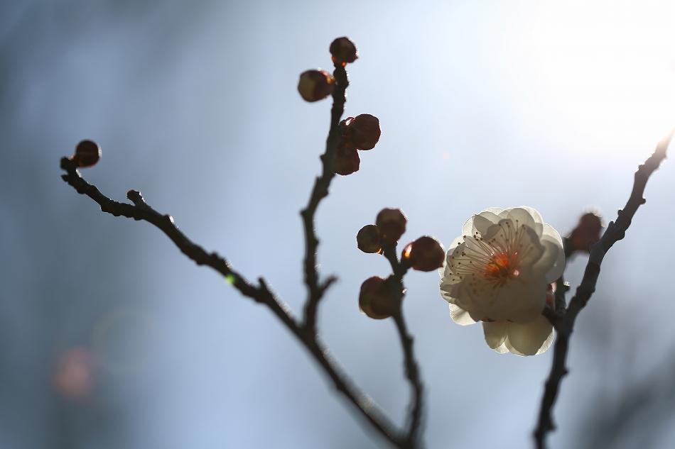 春到来08