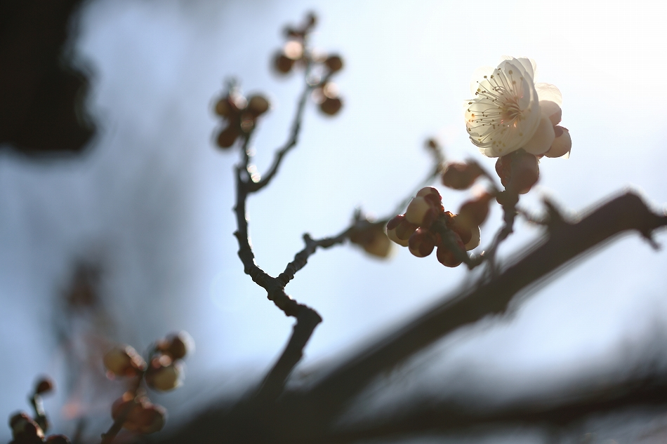 春到来07