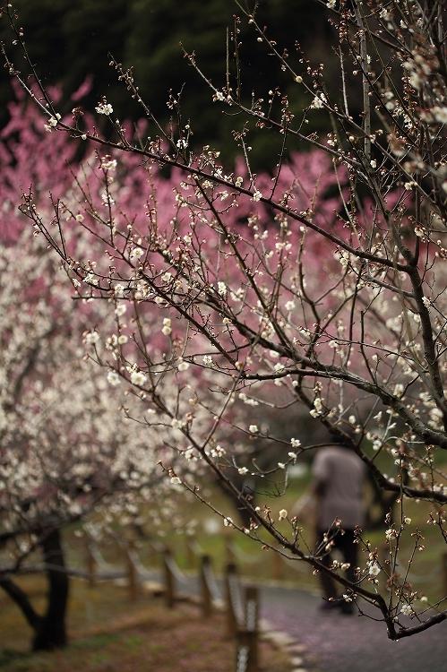 赤塚山の梅っつーか鳥03