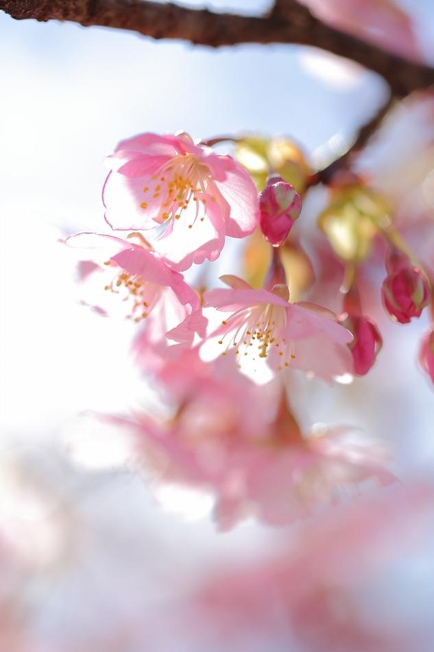 ピンク色ラブ03