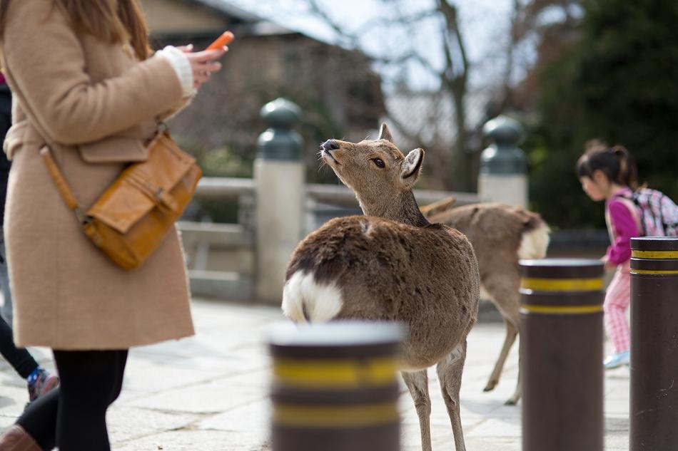 聞き分けが良い鹿-7
