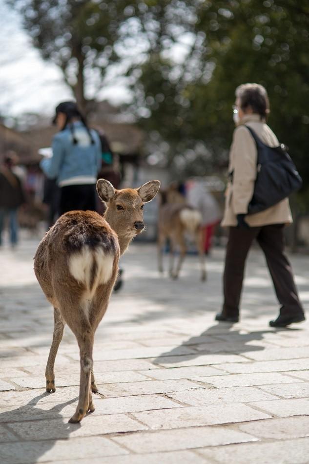 聞き分けが良い鹿-5