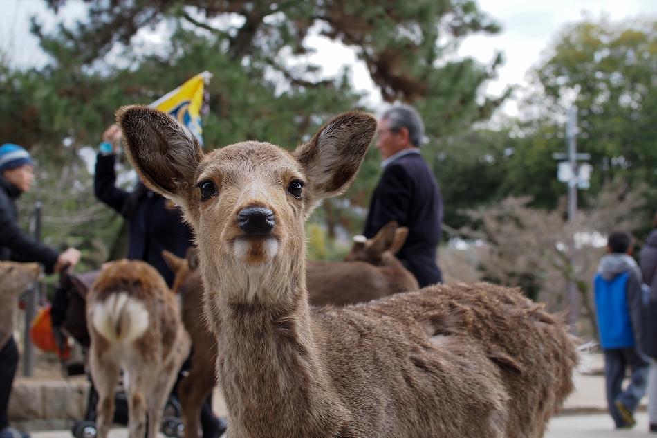聞き分けが良い鹿-2