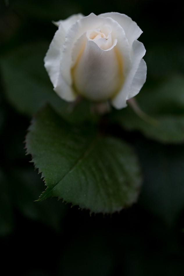 雨と風に降参西山公園-9