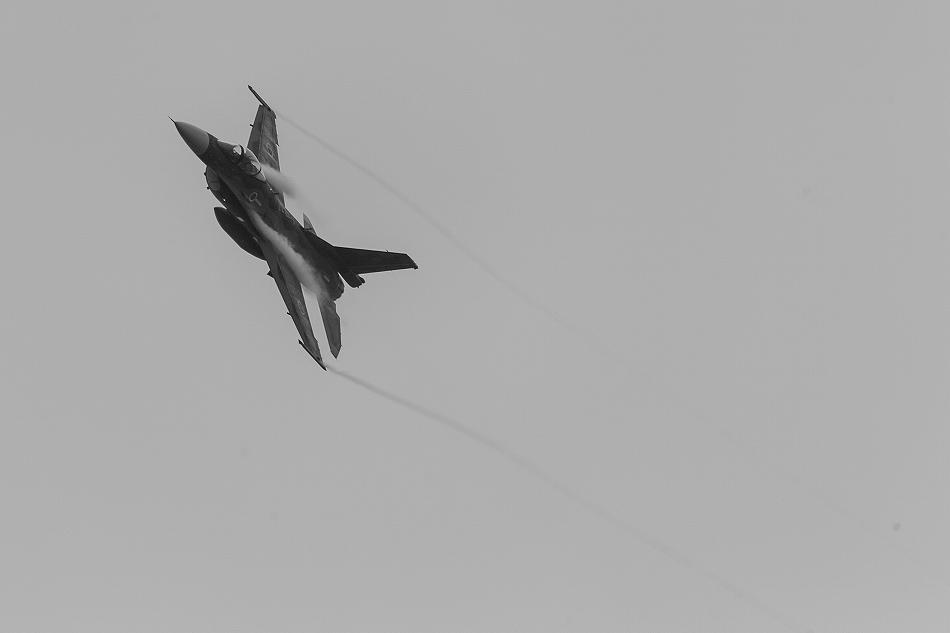 大トリミングF-2-8