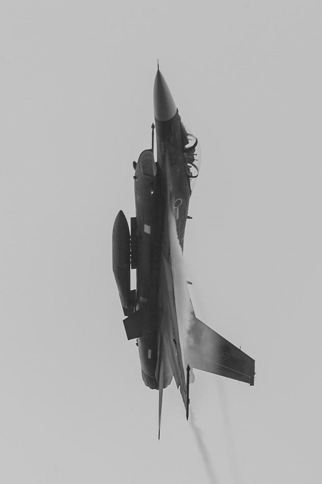 大トリミングF-2-9