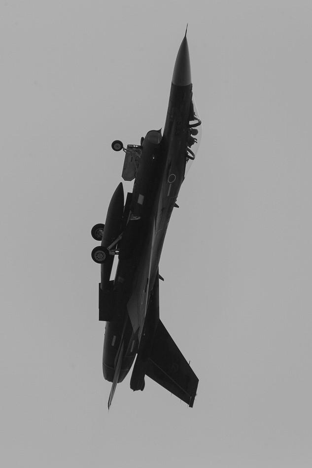 大トリミングF-2-4
