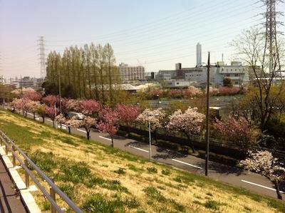 荒川さくら堤公園・川幅日本一20140415_4