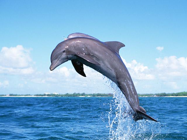 dolphin-jump.jpeg