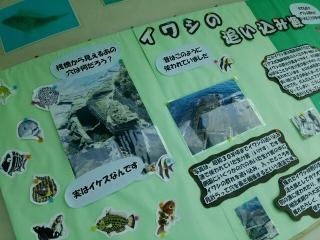 海中公園イワシ1