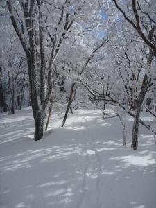 2014-02-11-081.jpg