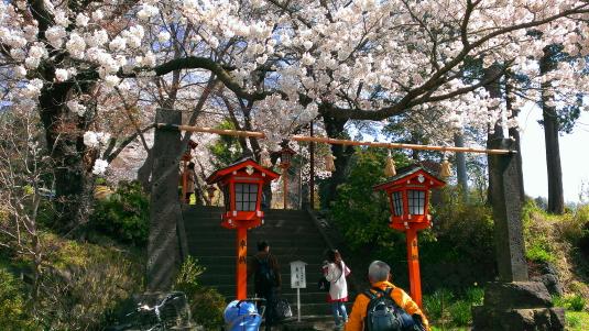 桜 浅間公園 入口