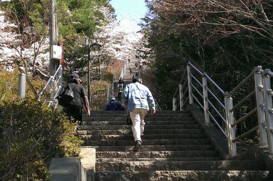 桜 浅間公園 階段