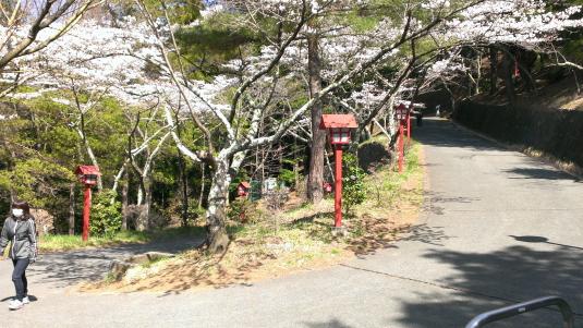 桜 浅間公園 車用道路
