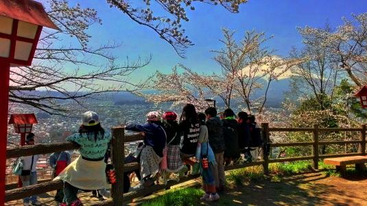 桜 浅間公園 子どもたち