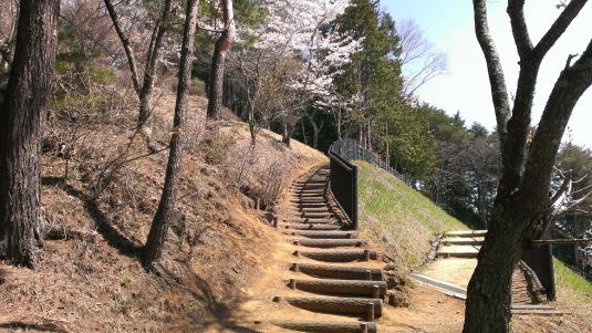 桜 浅間公園 更に上