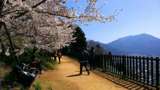 桜 浅間公園 遊歩道