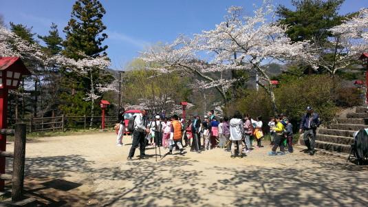 桜 浅間公園 上 駐車場