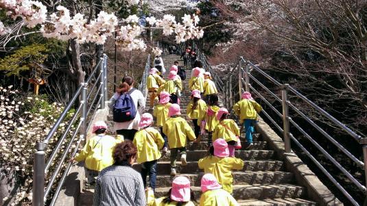 桜 浅間公園 階段 幼稚園児