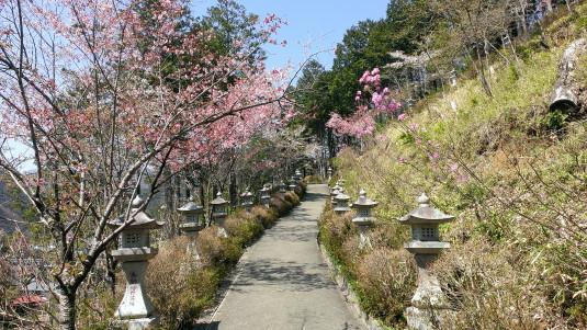 桜 真木お伊勢山 坂道