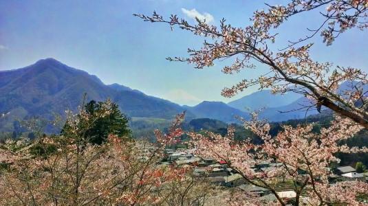 桜 真木お伊勢山 外観