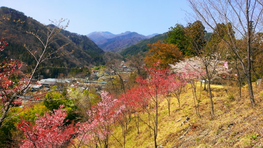 桜 真木お伊勢山 反対側