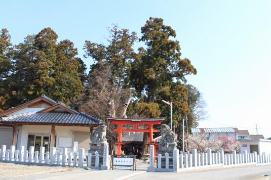天神天満宮 菜の花 神社