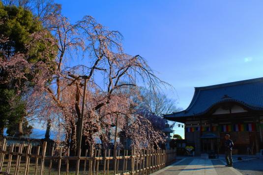 桜 宝寿院 外観