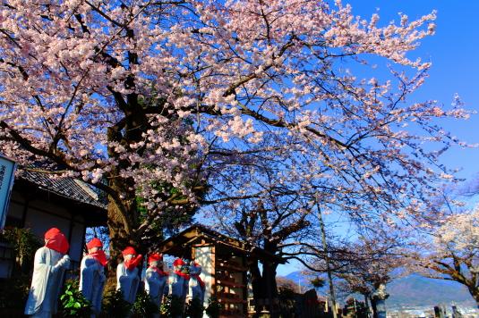 桜 宝寿院 お地蔵