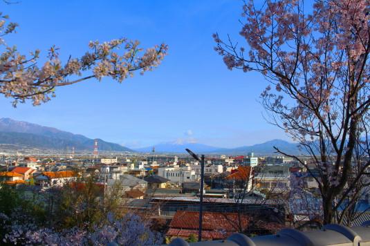 桜 宝寿院 眺め